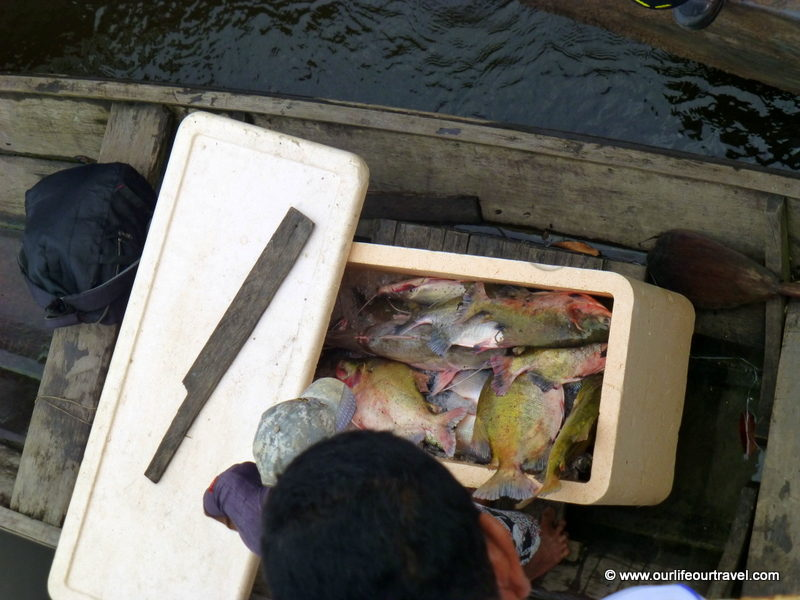 Those fish will be our dinner! Tabatinga - Manaus boat ride