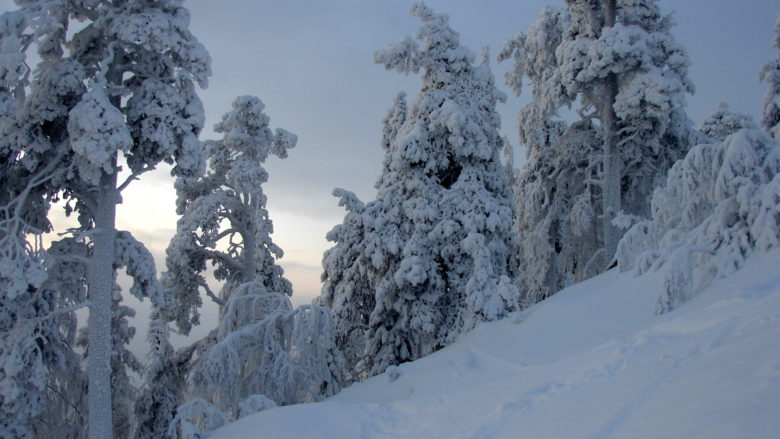 Winter in Pyhä-Luosto National Park