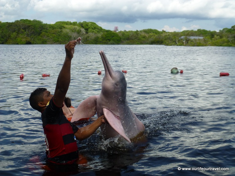 Why not so swim with pink dolphins. Manaus, Brazil.