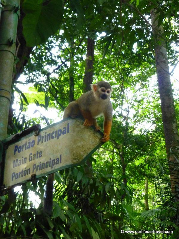 Belém Zoo, Amazonia, Brazil
