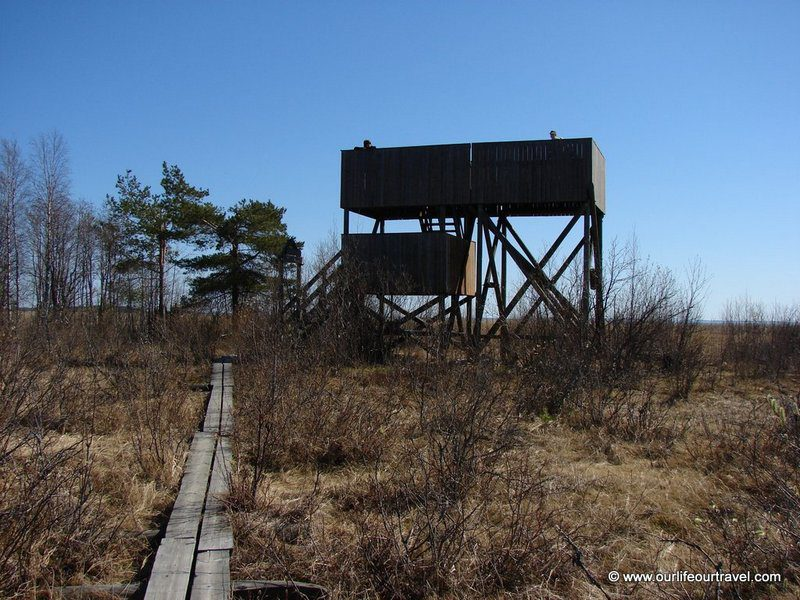 Bird observation tower in the middle of mires and lakes. Finland.
