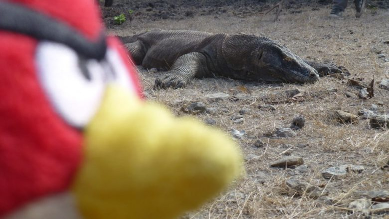 The traveling Birdie in Komodo Island, Indonesia www.ourlifeourtravel.com