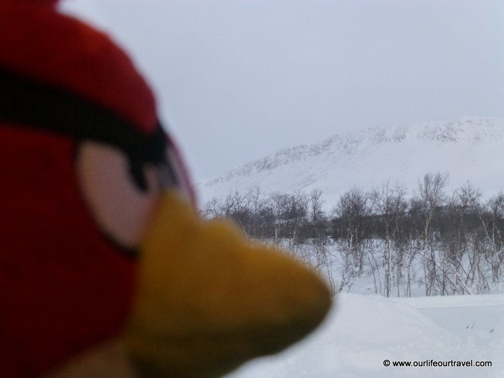The traveling Birdie on a warm winter day in Lapland, Finland www.ourlifeourtravel.com