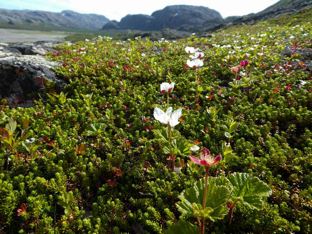 hiking in northern norway summer